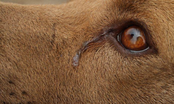 Jacksonville: Dog 'Cries' Every Night While She Awaits Adoption, Shelter Shares Sad Photo As Last Hope